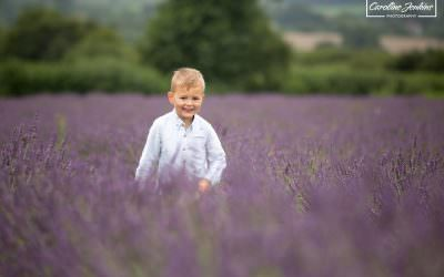The Lavender Fields Mini-Shoots