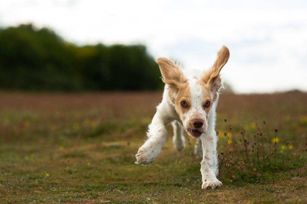 dog going crazy during a dog walk at stockbridge down
