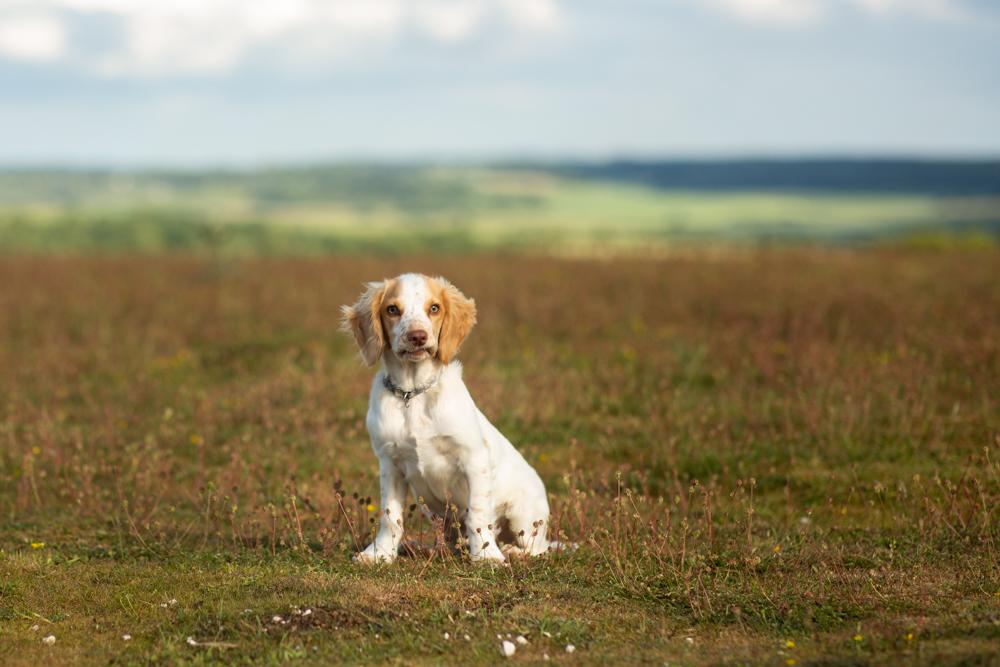 A Dog Photoshoot on Stockbridge Down
