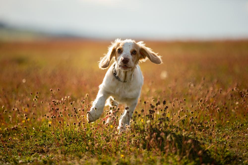 dog walk at stockbridge down