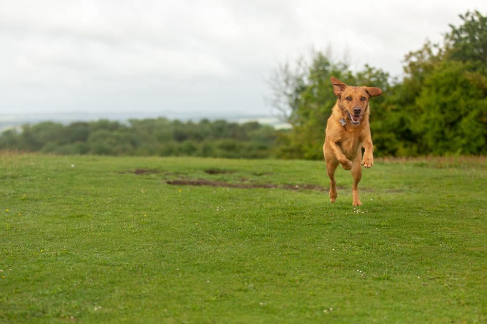 dog walks near chandlers ford - stockbridge down