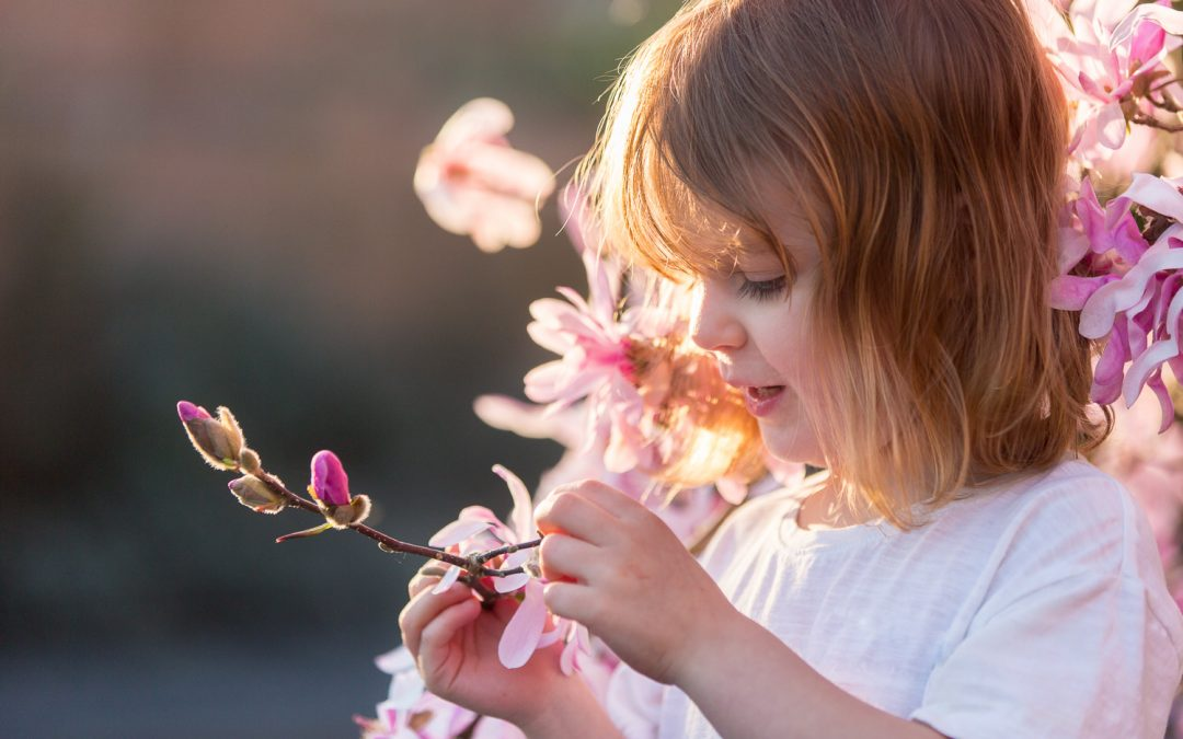 family photographer in winchester - young girl studying blossom