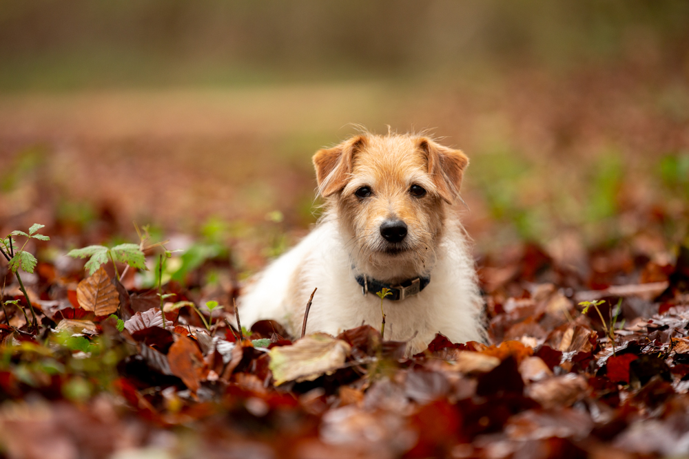 dog photography in chandlers ford