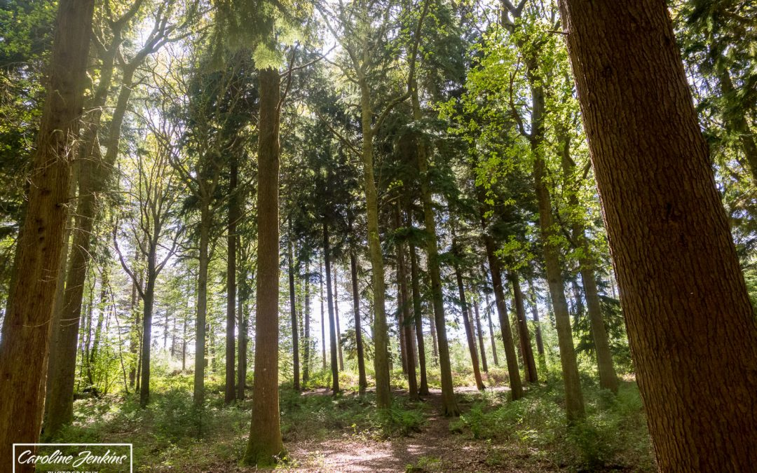 The Best Family-Friendly Dog Walks near Chandlers Ford – #6 Forest of Bere