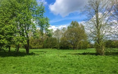 The Best Family-Friendly Dog Walks near Chandlers Ford – #5 Fleming Park