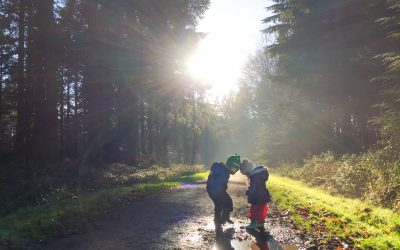 The Best Family-Friendly Dog Walks near Chandlers Ford – #7 Ampfield